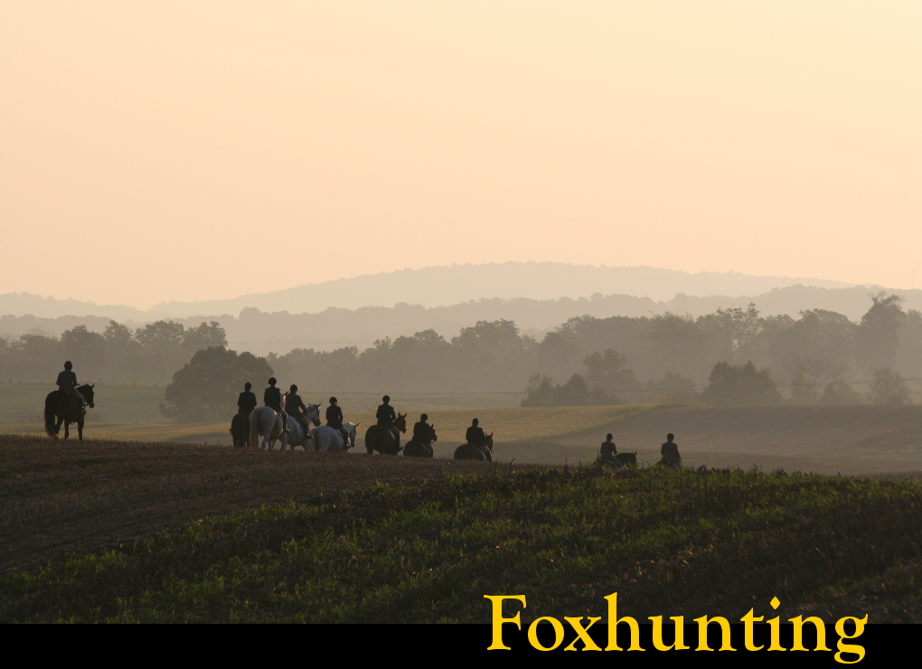 link to info on foxhunting